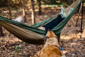 hammock camping with your dog
